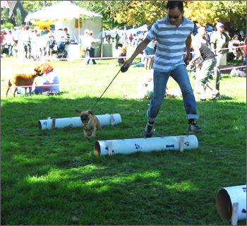 barkinthepark2