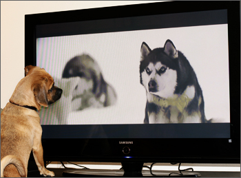 puggle_watchtv