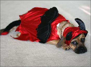 Devil Puggle