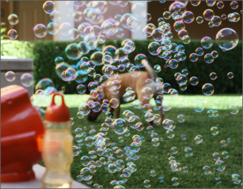gazillion fetch a bubble machine