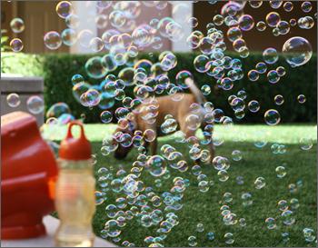 gazillion fetch a bubble machine