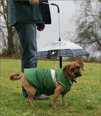 puggle and dog umbrella