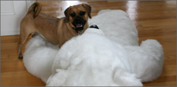 puggle preston and polar bear