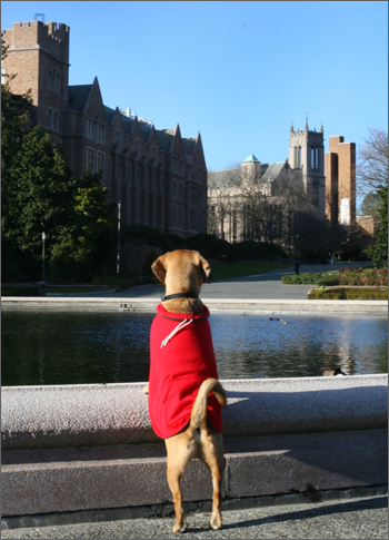 puggle preston at uw
