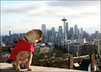 puggle preston seattle