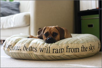 puggle preston's new bed