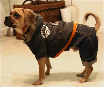 bomber_jacket2