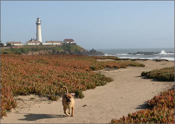 20080323_beach1.jpg