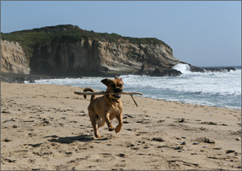 20080323_beach2.jpg