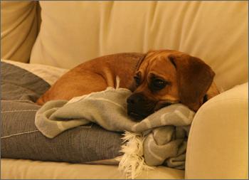 20080331_couchpotato1.jpg