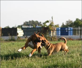 20080713_dogpark1.jpg