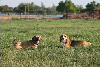 20080713_dogpark2.jpg
