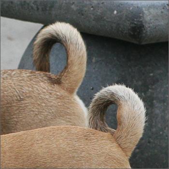 20090208_curlytails.jpg