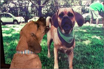 20091129_dog101