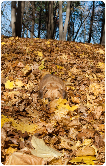 20091206_camouflage