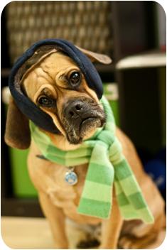 20100124_earmuffscarf