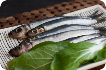 20100207_sardines