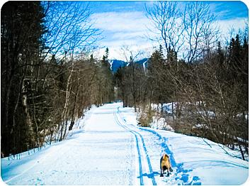 20100306_ski3-2