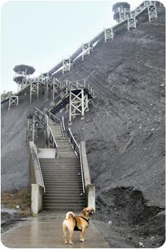 chute montmorency stairs