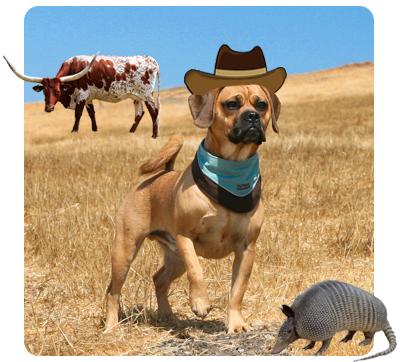 Cowboy Puggle
